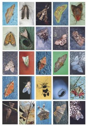 From Mariposas Nocturnas: Moths of Central and South America, A Study in Beauty and Diversity by Emmet Gowin