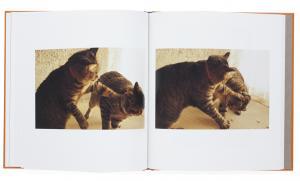 From A Cat Catcher in The Rye by Miyazaki Tsuyoshi