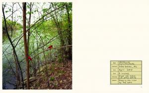 From Bird Watching by Paula McCartney