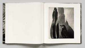 From Birds by Jim Dine
