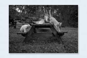 From Cats by Mark Steinmetz