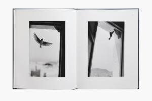 From Des oiseaux by Bernard Plossu