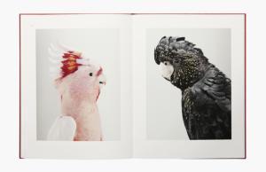 From Des oiseaux by Leila Jeffreys