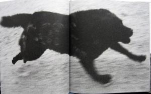 From Dogs Chasing My Car in the Desert by John Divola
