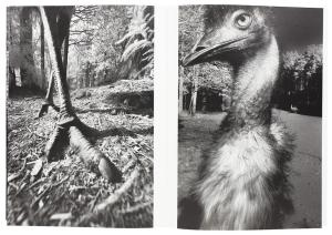 From Dromaius-鳥 by Hisako Sakurai
